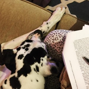 Great Dane sleeping next to a book.