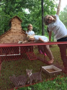Chicken coop that looks like a chapel housing gray and white kittens with three young white girls checking it out.