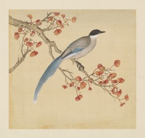 Yu Sheng (余省, 1736-1795) and Zhang Weibang (張為邦, active late 18th. C.) Mountain Magpie / Azure-winged Magpie (Cyanopica cyanus) from the Manual of Birds (鳥譜, niaopu) National Palace Museum, Taiwan