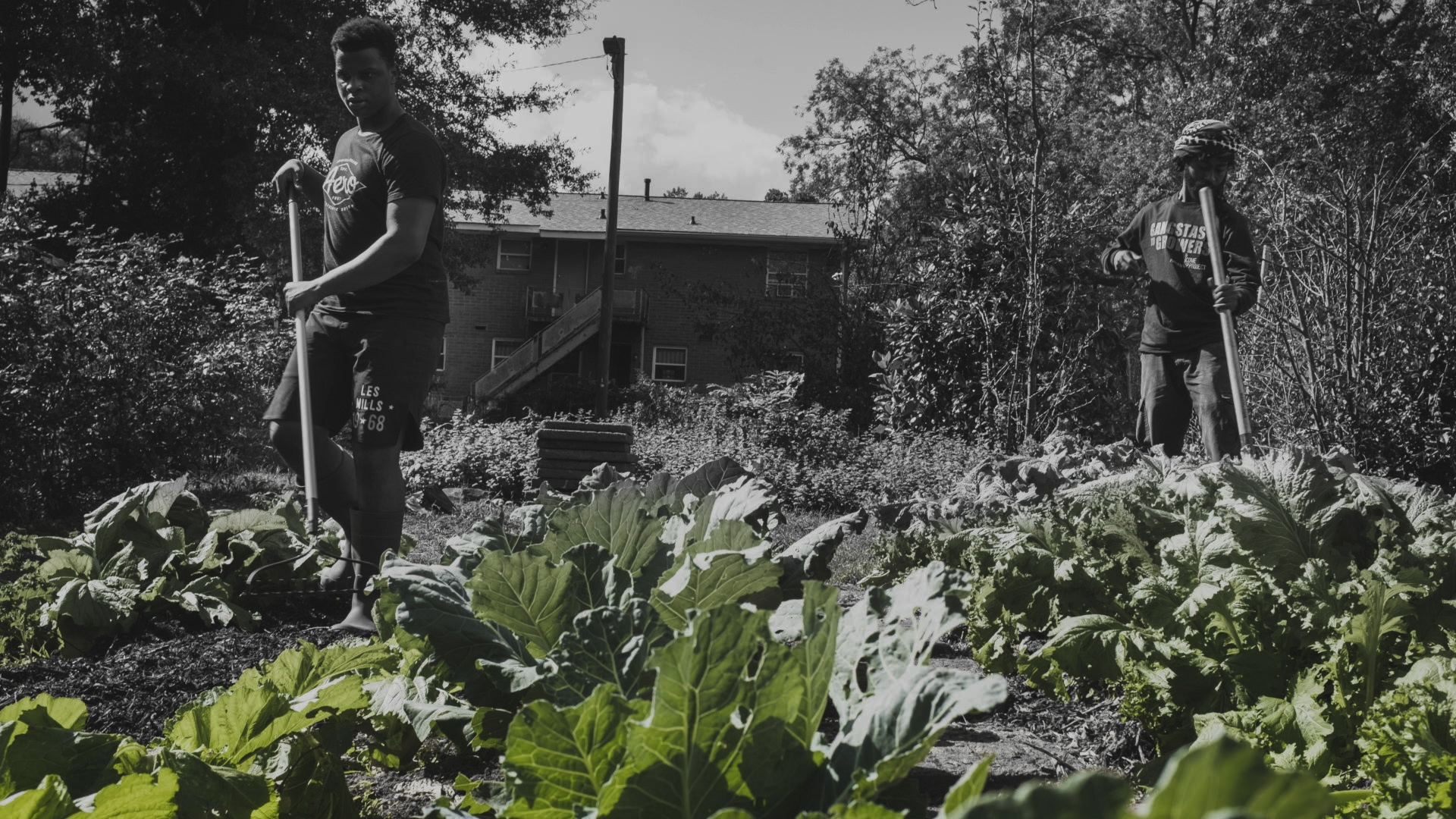 Photograph featuring two Black men working in a garden. The garden's kale leaves are green while the rest of the photo is in black and white.