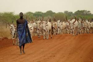 dinka_cattle