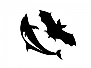Bats and Dolphins