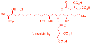 fumonisin