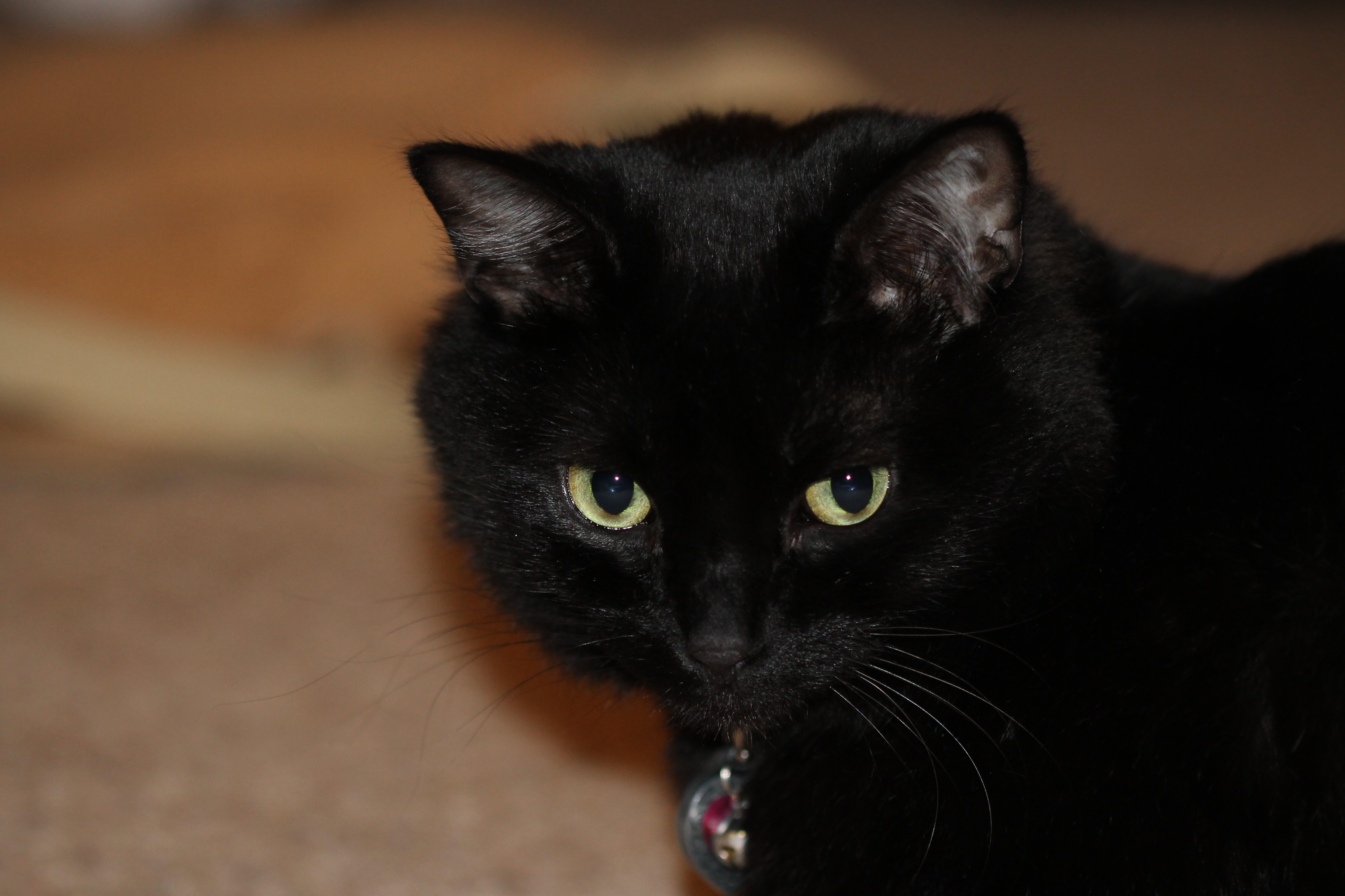 Cats and Death | Anthropological Perspectives on Death
