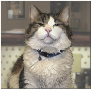 Oscar, the cat that can sense death in Steere House nursing home in Rhode Island