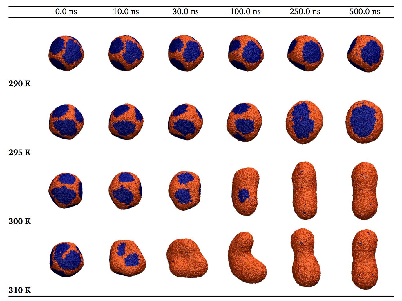 small-vesicle-melting