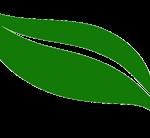 "The green ""swish"""