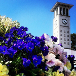 Photo of Emory's Cox Hall in springtime