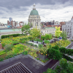 Photo of a city skyline with a green roof in the foreground