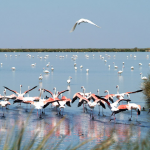 Photo of a flock of pink flamingos in a marsh