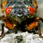 Close-up image of a cicada
