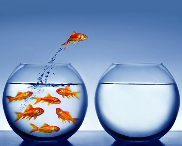 Photo of goldfish in a fish bowl