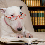 Photo of a dog rading a book in a library