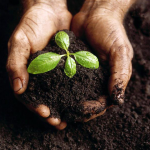 Photo of hands holding compost