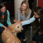 Photo of students interacting with a dog