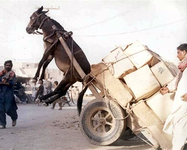 Photo of a donkey and cart