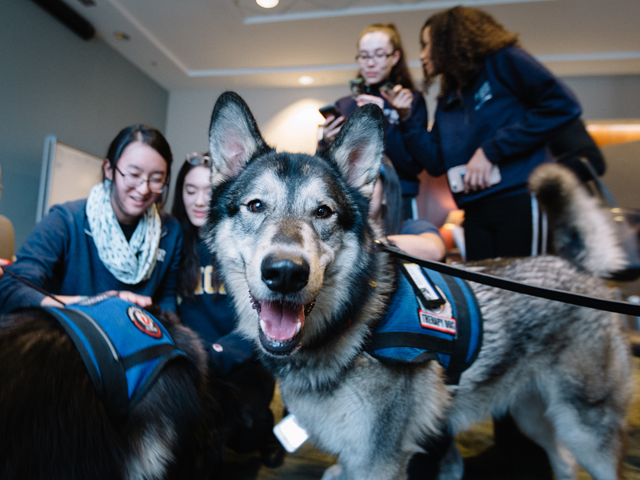 photo of a dog therapy dog