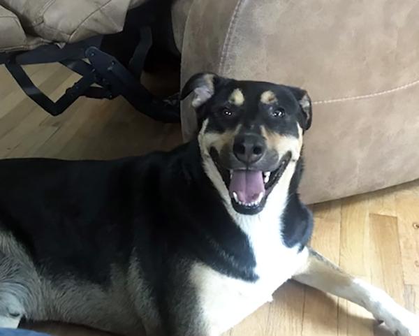 photo of smiling dog