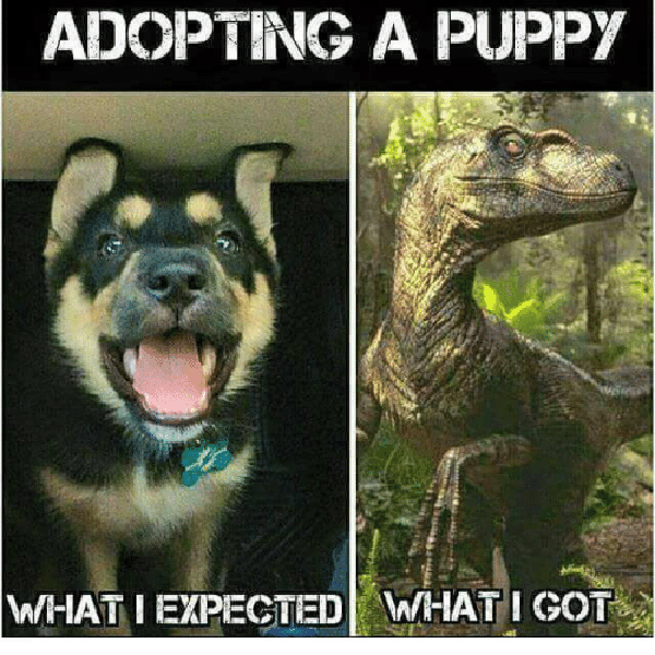 picture of a puppy and a dinosaur