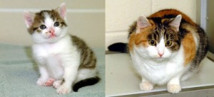 Left: CC (or Carbon Copy). Right: Rainbow. Photo courtesy TAMU, College of Veterinary Medicine. (from http://learn.genetics.utah.edu/content/cloning/whyclone/)