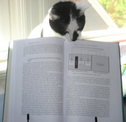 Lucca the Cat reads BRTM