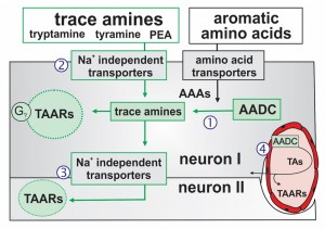 TA proposed mechanisms