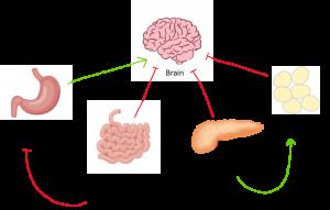 Appetite Diagram