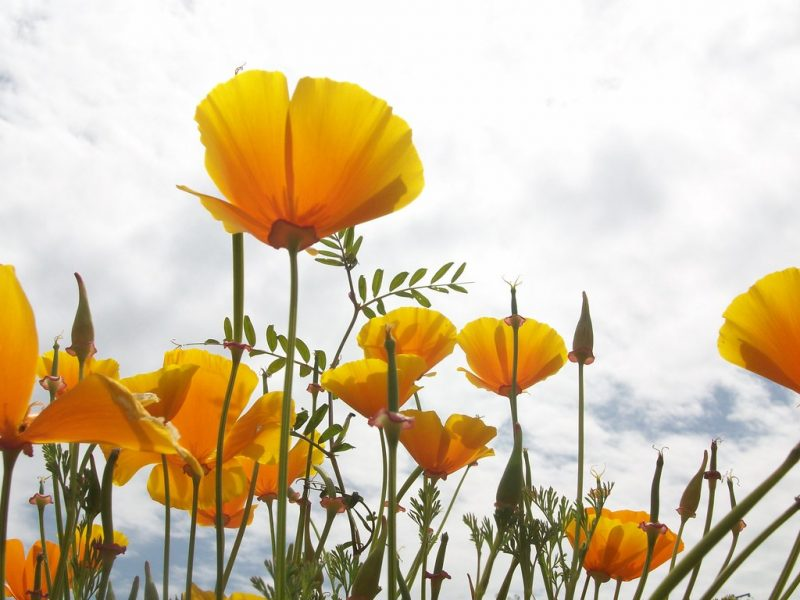 Flowers blooming in a field