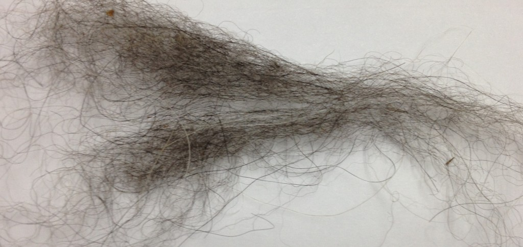 This is a sample of llama fiber Notice how much thicker the fibers are compared to the alpaca